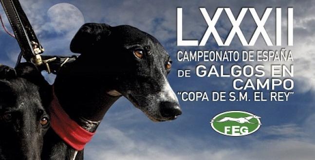 CARTEL OFICIAL DEL LXXXII CAMPEONATO DE ESPAÑA DE GALGOS EN CAMPO COPA S.M EL REY. MADRIGAL DE LAS ALTAS TORRES